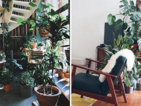 atelier en décoration plantes intérieures